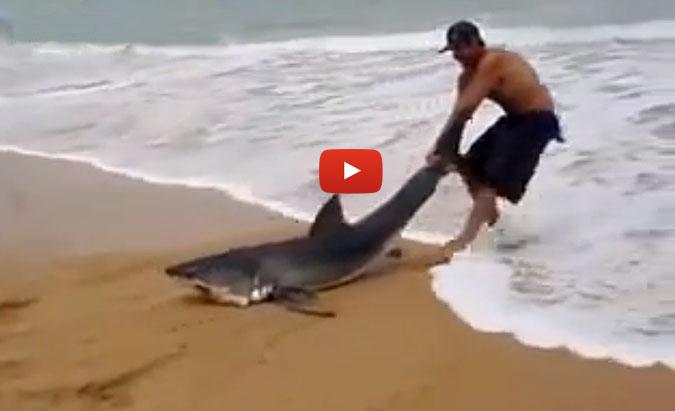 man saves great white shark on beach