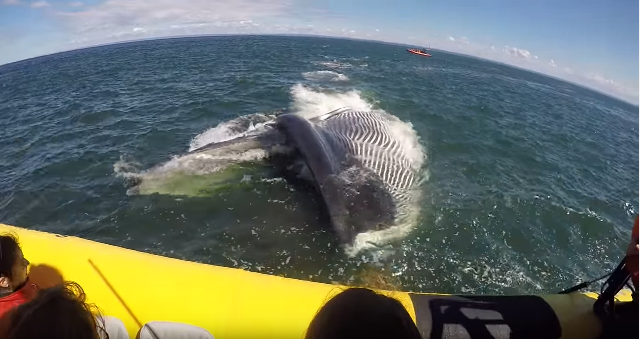An Amazing White Breaching Experience Caught on Camera