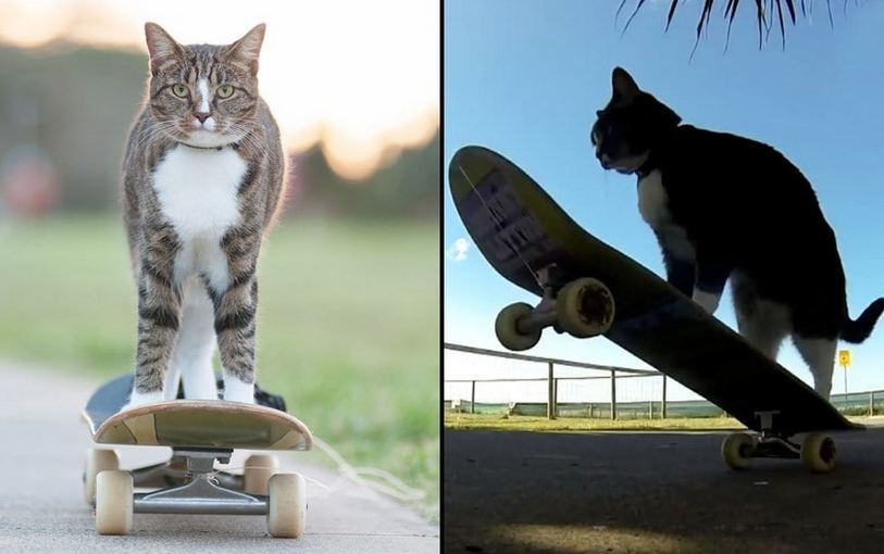 Meet The Most Talented Cat In The World